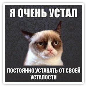 kote_ustal1